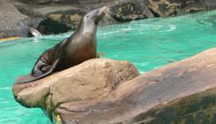 contrôle de la qualité de l'eau des parcs zoologiques