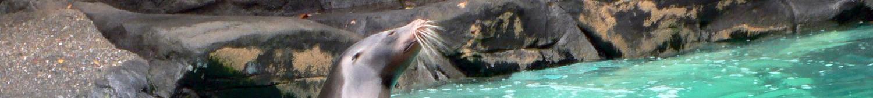 Controle de la qualite de l'eau des parcs zoologiques et eaux animalières