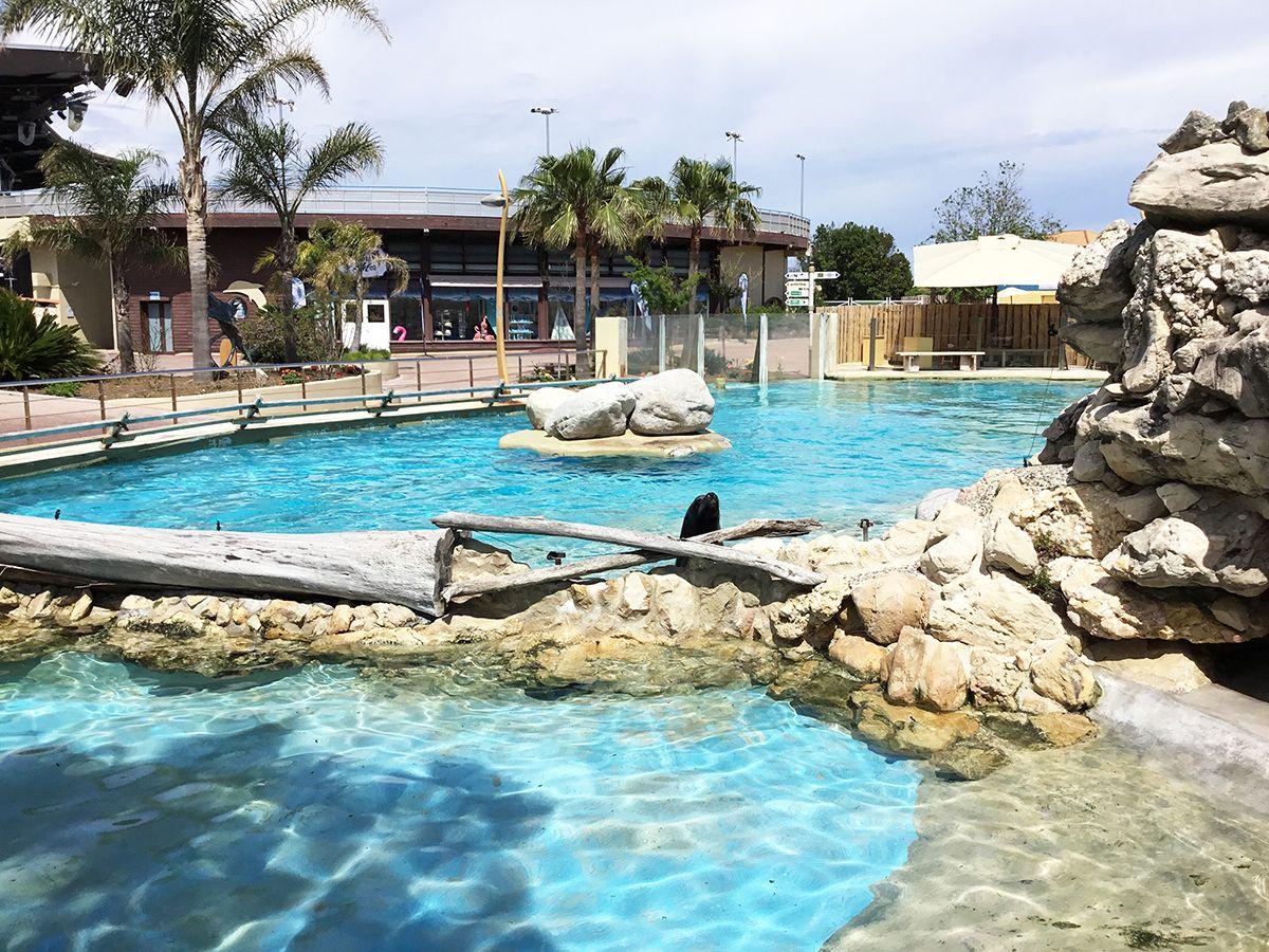 Marineland - bassin des otaries