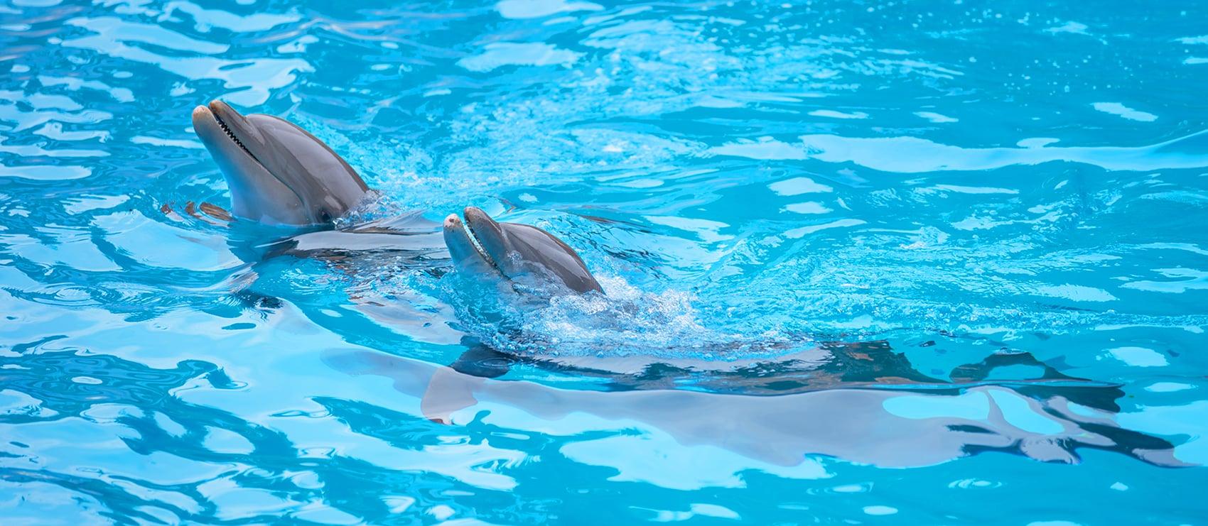traitement de l'eau des parcs zoologiques
